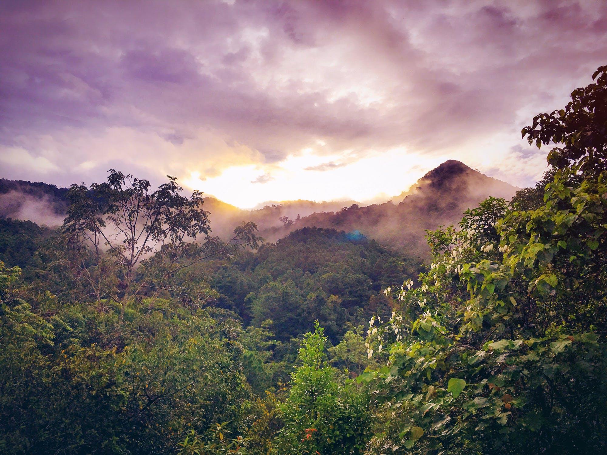 Amazonas-regnskog